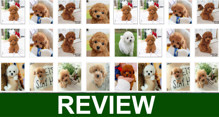 Realistic Teddy Dog Lucky Review