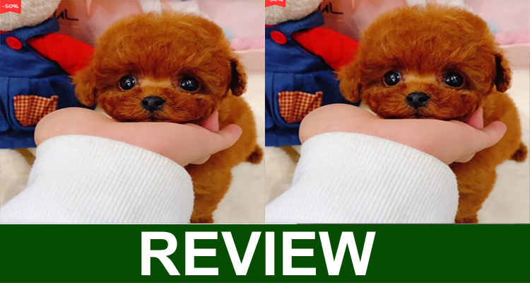 Madmaxs Realistic Dog Reviews