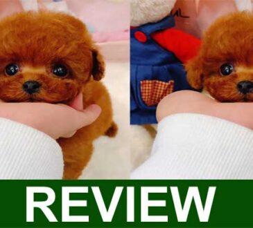 Breobi Dog Reviews