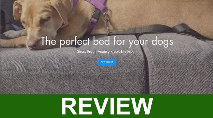 Doggypit-Reviews-2020