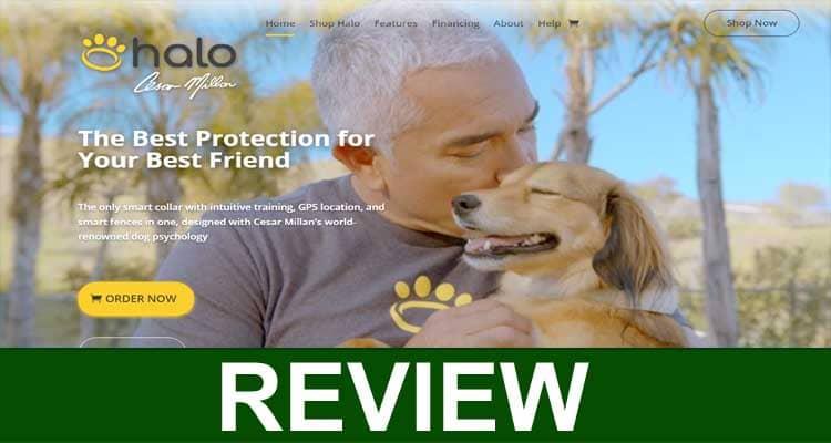 Halo Collar Reviews