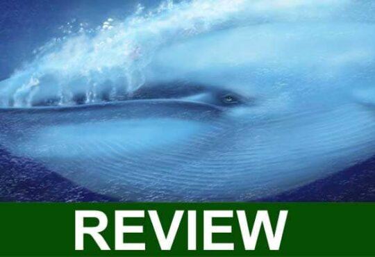 Blue Whale Bitten in Half 2021