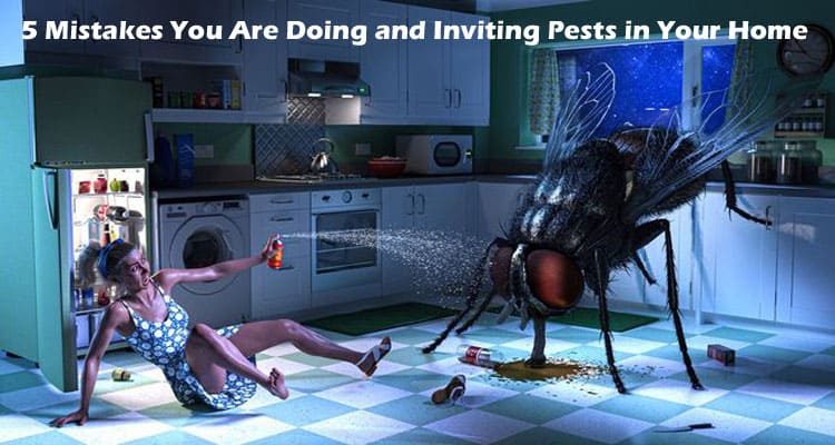 5 Mistakes You Are Doing and Inviting Pests in Your Home 2021